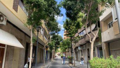 Photo of Parques y Jardines inicia la plantación de 86 nuevos árboles en distintas calles de ciudad.