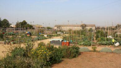 Photo of La Concejalía de Medio Ambiente, Esquerra Unida Sant Vicent, prepara las nuevas concesiones de parcelas de los huertos urbanos
